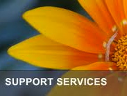 Yellow daisy in background and support services text